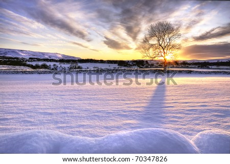 Tree in snow scene with dramatic sunset - stock photo