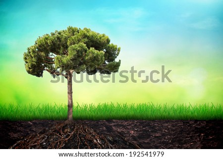 Tree in soil with grass  - stock photo