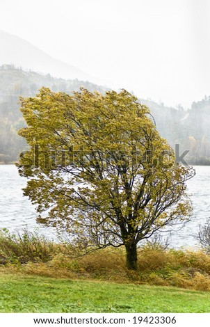 Tree in stormy weather at autumn in Norway - stock photo