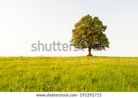 Tree in the field - stock photo