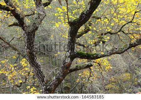 Tree in the forest. Road to San Facundo Matavenero. El Bierzo. Leon. - stock photo