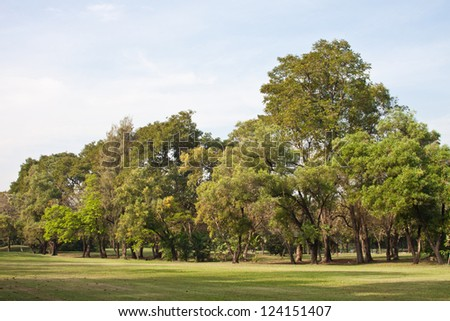 Tree In The Golf Field