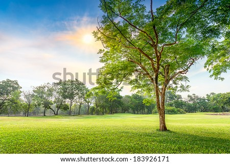 Tree in the meadow in sunset time - stock photo