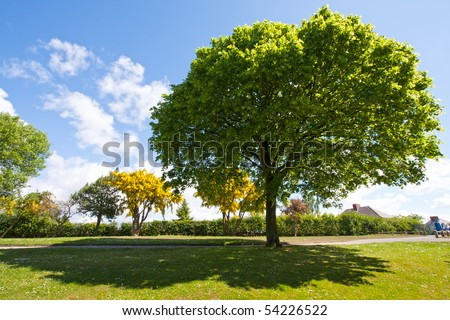 Tree in the park - stock photo