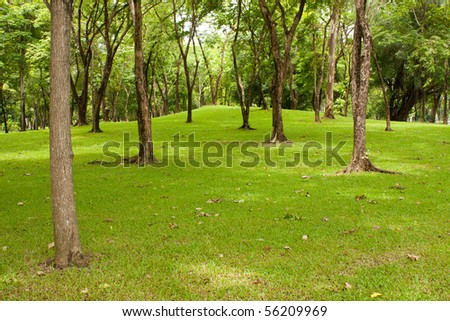 tree in the park, green grass in the park - stock photo