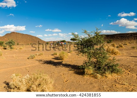 tree in the Sahara desert