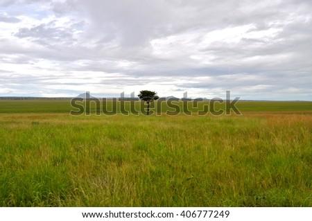 Tree in the savanna, Africa - stock photo