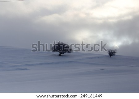 tree in the snow at dawn sun - stock photo