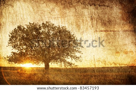 Tree in the summer field. Photo in old image style. - stock photo
