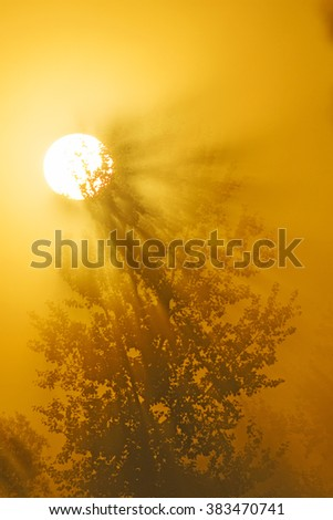 Tree in the sun rising in the fog - stock photo