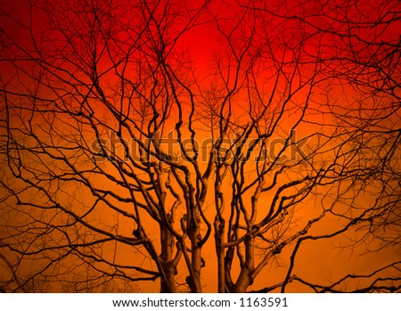 Tree in the sunset with a bright orange background - stock photo
