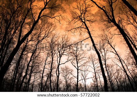 Tree in the sunset with a bright orange background / Collection from Gerecse mountains, Hungary - stock photo