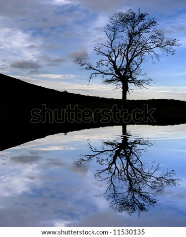 tree in the top of the mountain, with water reflection