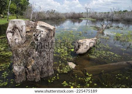 Tree in the Water - stock photo