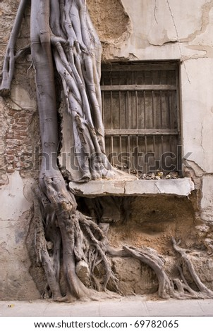 tree in the window (or window in the tree) - stock photo