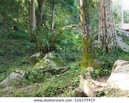 tree in tropical rain forest and many big stone landscape in thailand,jungle