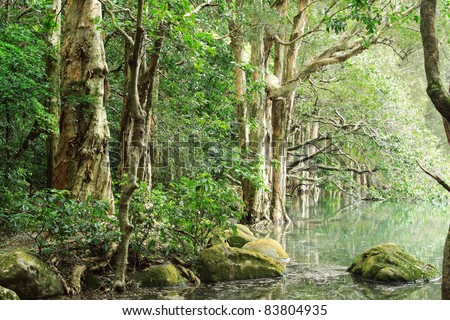 tree in water - stock photo