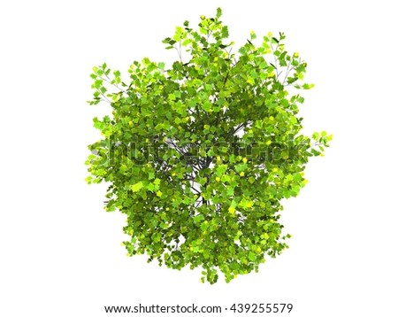 tree in white background
