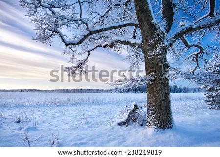 Tree in winter landscape - stock photo