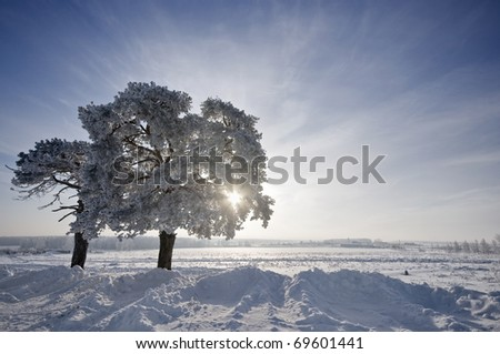 tree in winter with snow covered fields under sun - stock photo
