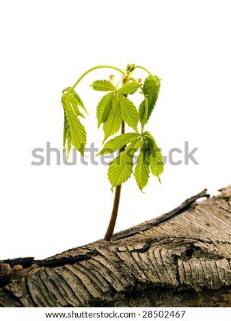 Tree in wood - stock photo