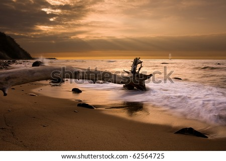 tree is in the water - stock photo