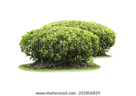 tree isolate on white background - stock photo