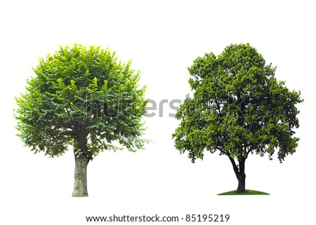 Tree isolated against white. - stock photo