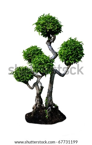 Tree isolated on a white - stock photo