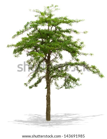 Tree isolated on a white background .