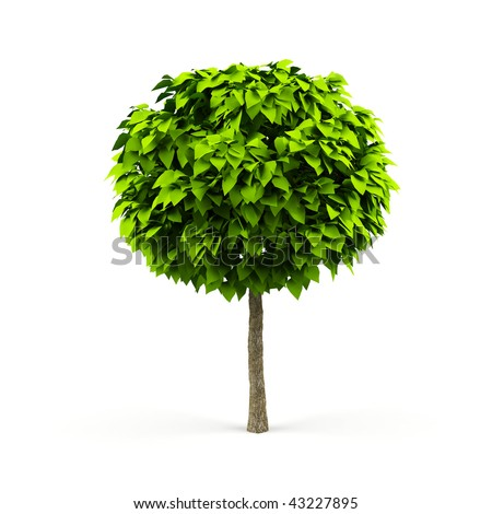 Tree isolated on a white background. - stock photo