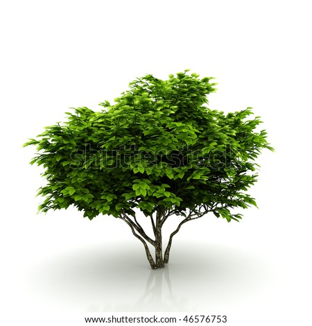Tree isolated on a white background - stock photo