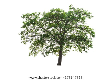 Tree isolated on white background - stock photo
