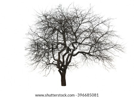 tree isolated over white background - stock photo