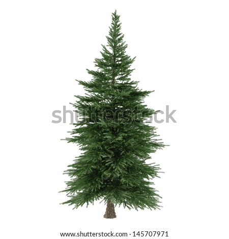 Tree isolated. Picea fir-tree - stock photo