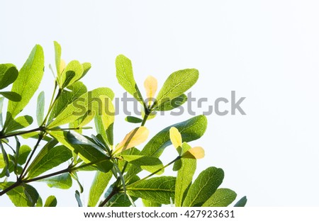 tree leaf from nature use as background, eco concept