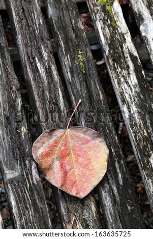 tree leaf on wooden surface  - stock photo