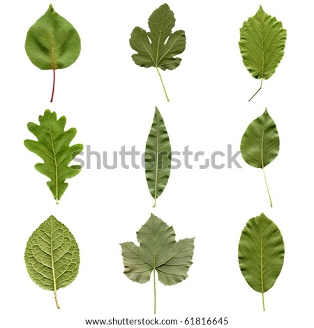 Tree leaves collage - isolated over white background - back side