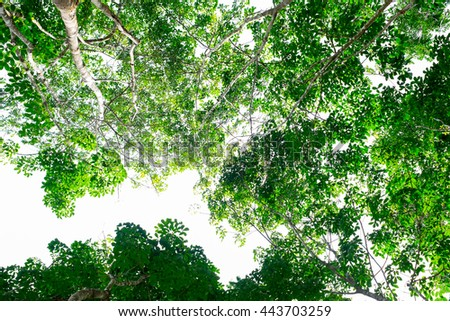 tree leaves with blue sky background