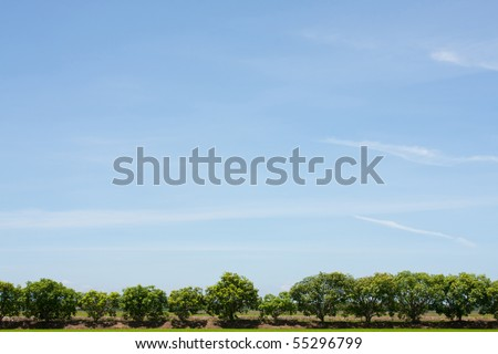 tree line in the field on the blue sky. - stock photo