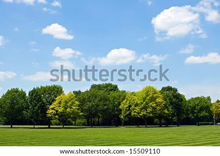 Tree Line with Sky - stock photo