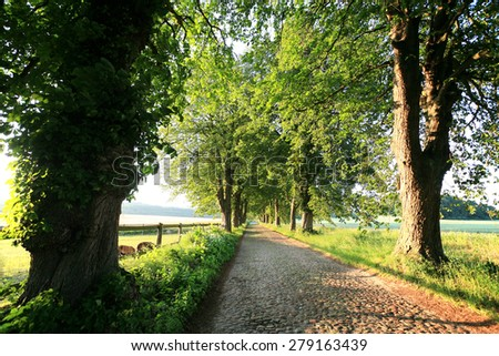 Tree lined alley - stock photo