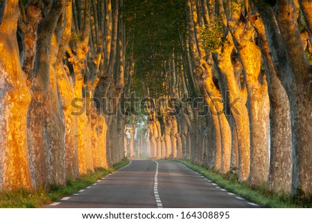Tree-lined avenue at sunrise, near small town Apt, Vaucluse, Provence, France - stock photo