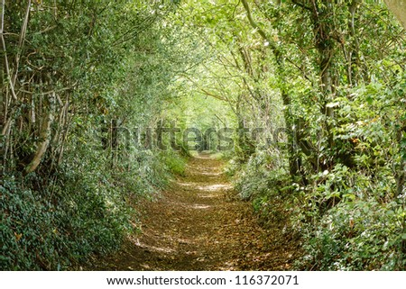 Tree lined path - stock photo