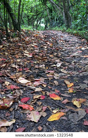 Tree lined path with leaves - stock photo