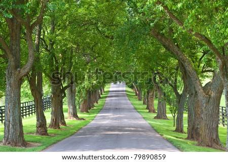 tree lined road - stock photo
