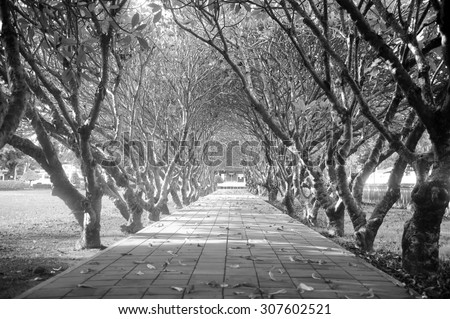 tree lined road,black and white background.  - stock photo