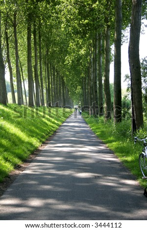 Tree lines path on a bright sunny day - happens to be the canal path from Bruges to Damm in Belgium - stock photo