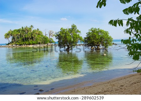 Tree mangrove in the area of low tide. Southeast Asia - stock photo