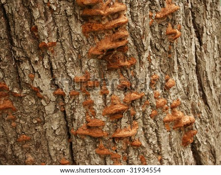 Tree mushrooms - stock photo